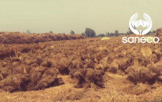 9 mai rapport de recolte saneco lin