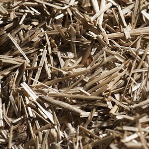 anas-flax-saneco-shives