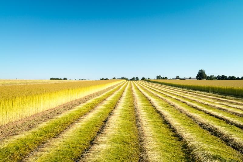 Retting-saneco-flax