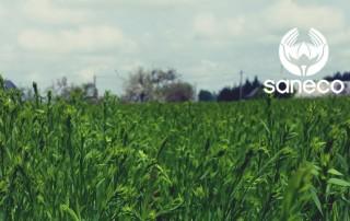 7-juin-rapport-de-recolte-saneco-lin