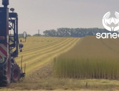 Rapport de récolte sur le lin – 28 Juillet 2016