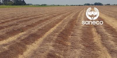 rapport recolte saneco flax linen fiber crop report