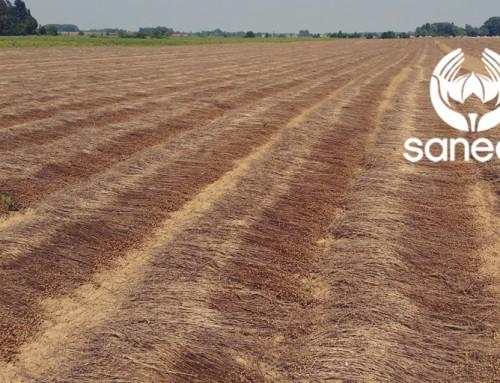 Rapport de récolte sur le lin – 16 Août 2016