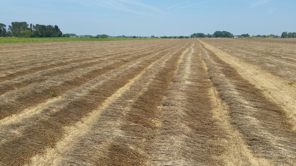 saneco flax linen france lin linen crop report