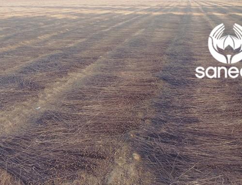 Rapport de récolte sur le lin – 12 Septembre 2016