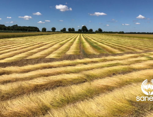 Flax crop report – July 23 2018