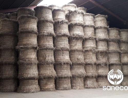 Rapport de récolte sur le lin – 21 septembre 2018